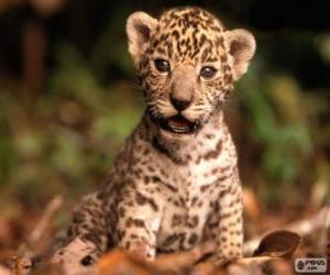 Puzle Um pequeno jaguar