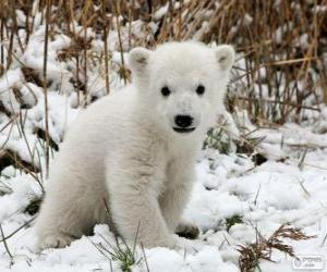 Puzle Um pequeno urso