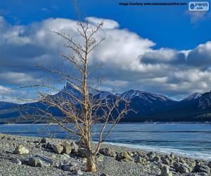 Puzle Uma árvore morta, perto do lago