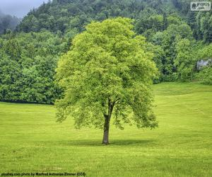 Puzle Uma árvore no prado