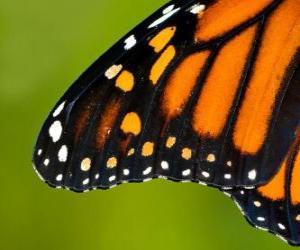Puzle Uma asa de borboleta