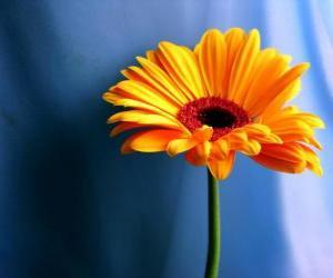 Puzle Uma flor simples, que belo presente para sua mãe
