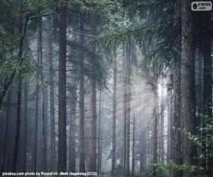 Puzle Uma floresta densa