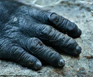 Puzle Uma mão do gorila