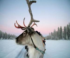 Puzle Uma rena de Natal puxando um trenó