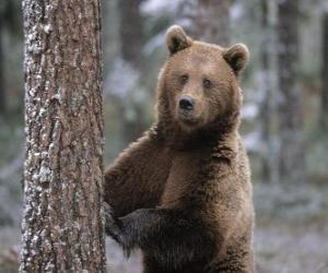 Puzle Urso marrom europeu em pé descansando em uma árvore