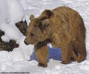 Puzle Urso marrom na neve