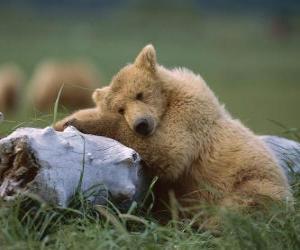 Puzle Urso repousando sobre um tronco