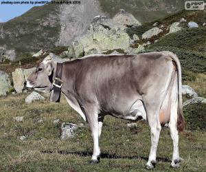 Puzle Vaca no alto das montanhas