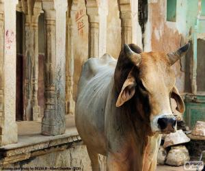 Puzle Vaca sagrada, Índia