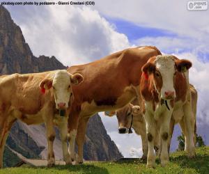 Puzle Vacas