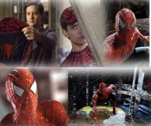 Puzle Várias imagens do Homem Aranha