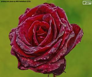 Puzle Vermelho rosa