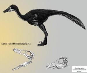 Puzle Zanabazar junior é um do maior conhecido Troodontidae, com um crânio de 272 mm