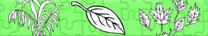 Puzzles de Plantas e Folhas