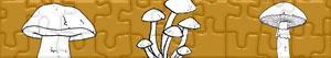 Puzzles de Cogumelos